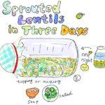 レンズ豆自家製スプラウトの作り方