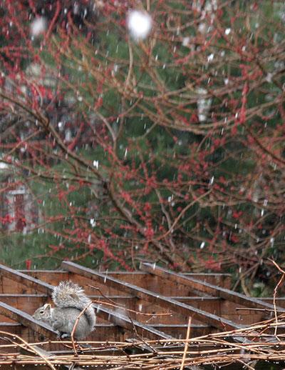 ニューヨーク春の雪とリス