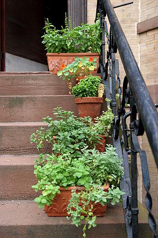 階段ハーブガーデン