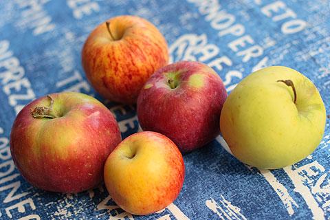 いろんなリンゴ