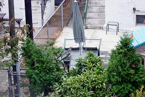 ニューヨーク裏庭のリス:全貌