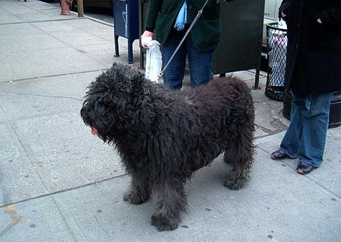 散歩中の黒い犬