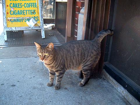 猫ちゃん全身写真