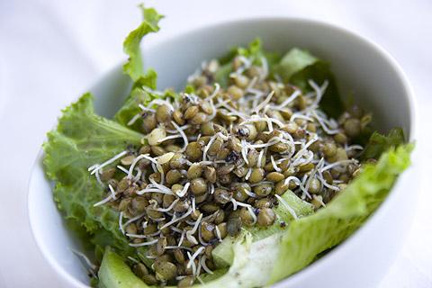 レンズ豆のスプラウトサラダ