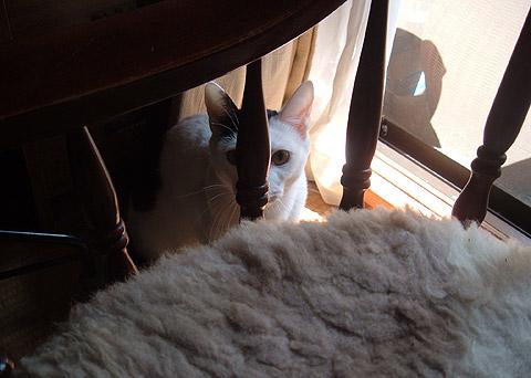 母が名付けた猫、健ちゃん