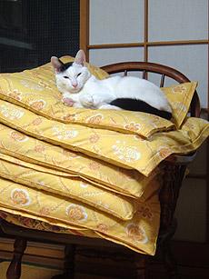 猫ちゃん、座布団何枚?