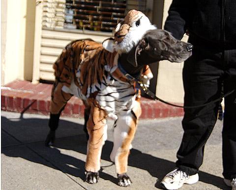 ハロウィーン。犬の仮装 in ニューヨーク
