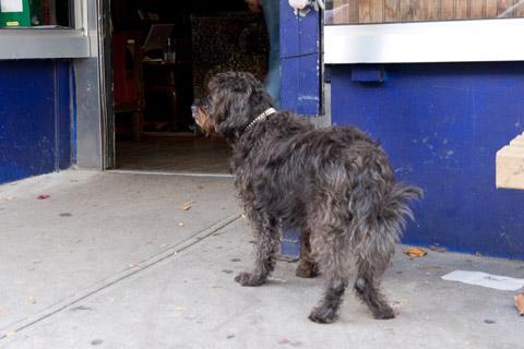 カフェの前で飼い主を待つ黒い犬1