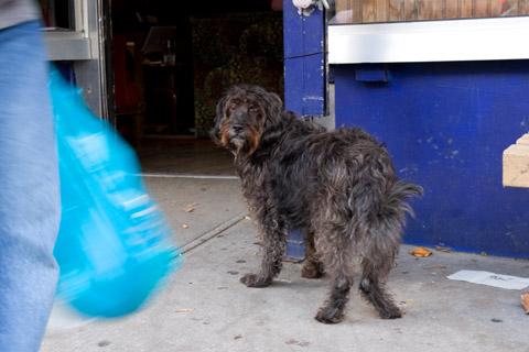 カフェの前で飼い主を待つ黒い犬2