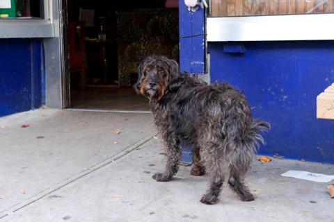 カフェの前で飼い主を待つ黒い犬3