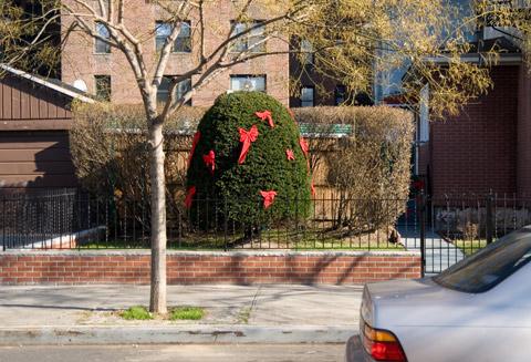 庭の丸く刈り込まれた木:ニューヨークご近所クリスマス散歩