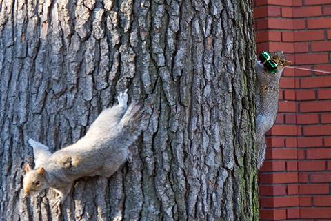 リス、プレゼントもらったの?!:ニューヨークご近所クリスマス散歩