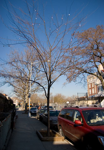街路樹:ニューヨークご近所クリスマス散歩