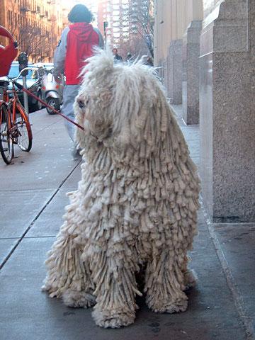 レゲエな犬