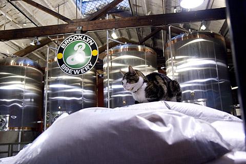 ブルックリン・ブルーワリーの猫