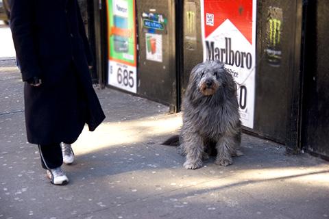 毛むくじゃら犬