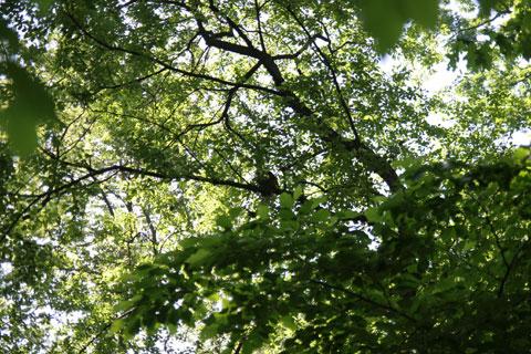 鳥の巣:スローライフ、公園散歩写真