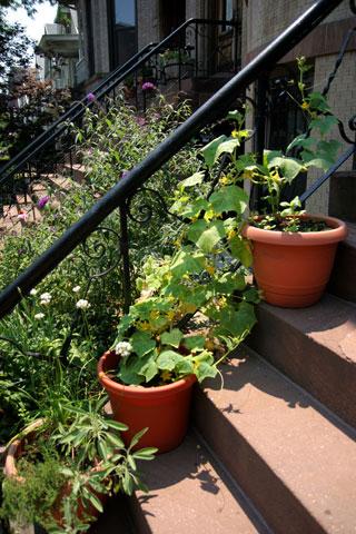 階段鉢植えガーデン