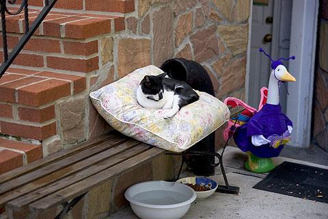 クッションで寝るネコちゃん