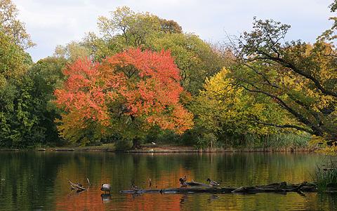 ニューヨーク公園の紅葉写真1