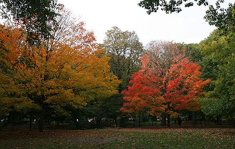 ニューヨーク公園の紅葉写真2