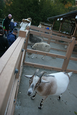 25zoo_sheep.jpg