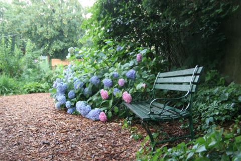ニューヨークのコミュニティ・ガーデンのベンチとアジサイ