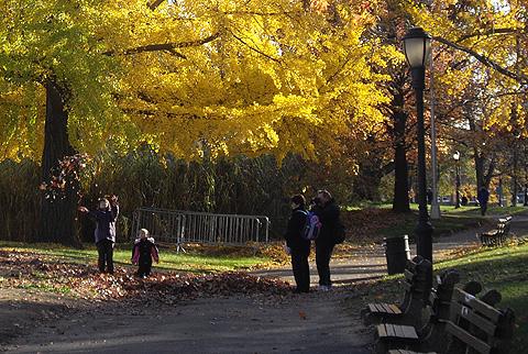 落ち葉遊び:ニューヨーク紅葉狩り