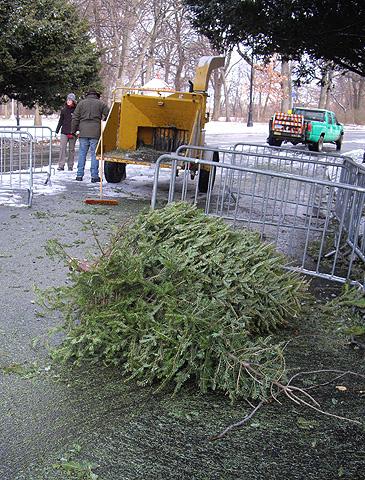 マルチ待ちクリスマスツリー