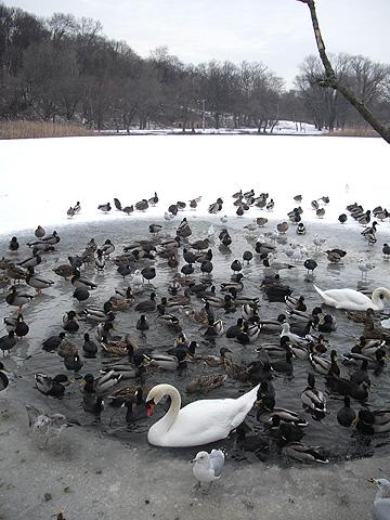 凍った湖と鳥の軍団