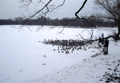 凍ったブルックリンの湖と鳥