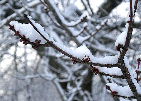 雪の公園・芽吹き