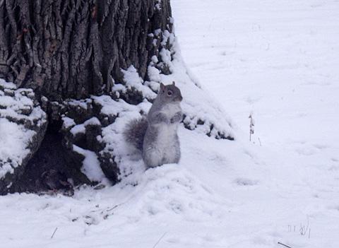 雪の公園・リス