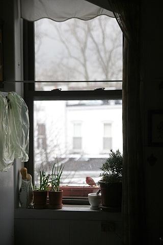 窓辺のプランター餌台