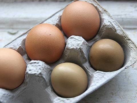 鶏の卵と雉の卵