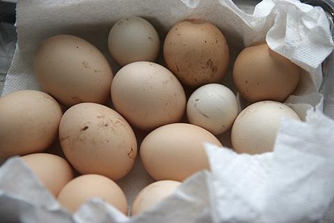 生まれたての卵