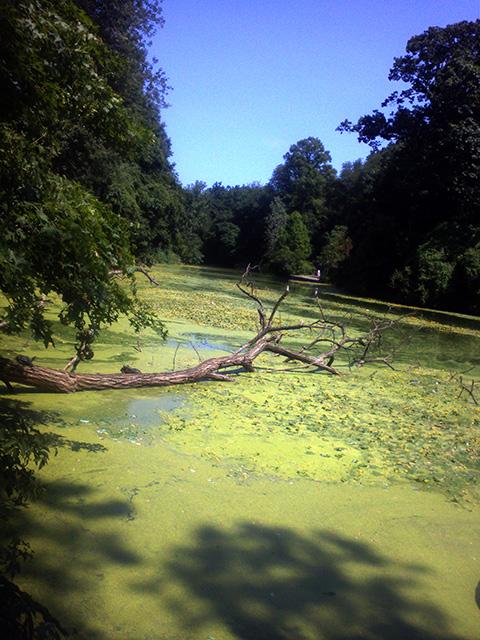 夏のピクニック、ニューヨークの公園、プロスペクトパーク川辺