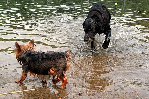 水遊びする犬5