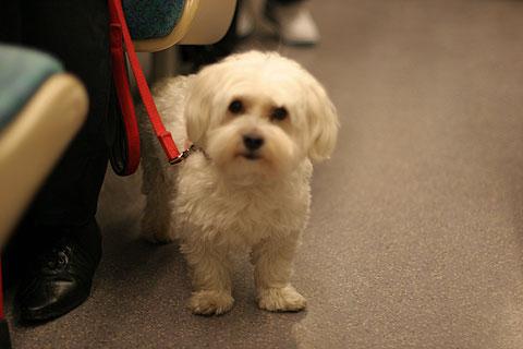 フランス旅行:リヨンの犬4