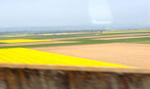 TGBからの車窓:菜の花畑