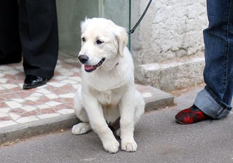 フランス旅行:リヨンの犬3