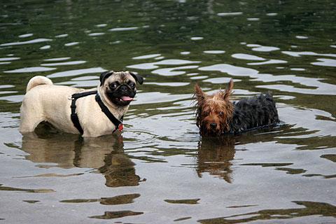 水遊びする犬8