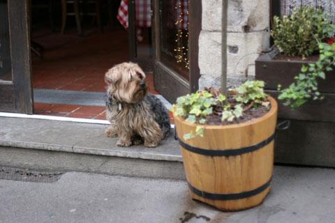 フランス旅行:リヨンの犬5