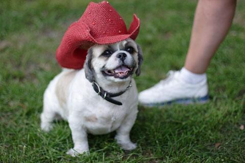 犬の写真:バスターと帽子