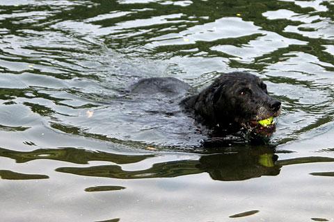 水遊びする犬3