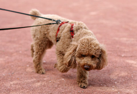 フランス旅行:リヨンの犬2