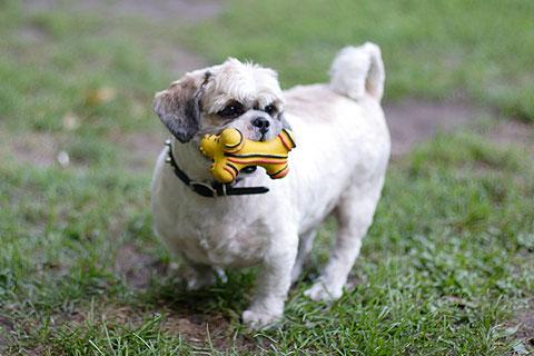 犬の写真:バスターと骨のおもちゃ