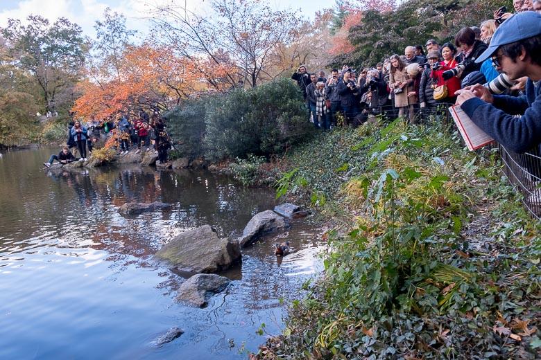ニューヨーク、セントラルパークの池に群がる人々