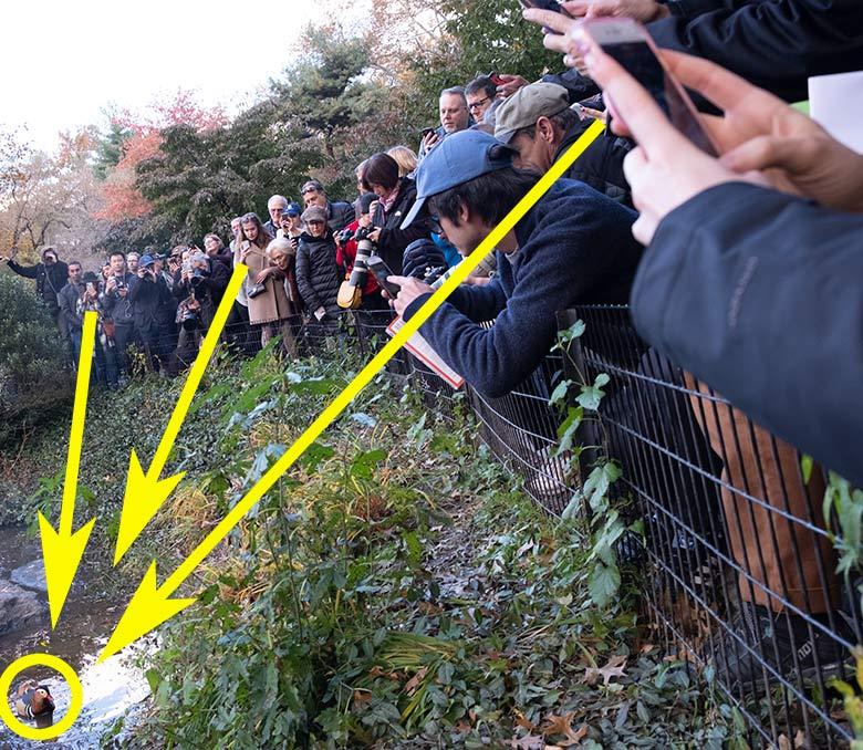 ニューヨーク、セントラルパークの池で群衆が